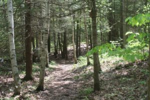 hobstone trail (1)
