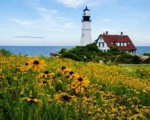 Finalist_Field of Flowers and Lighthouse_Megan Wakefield